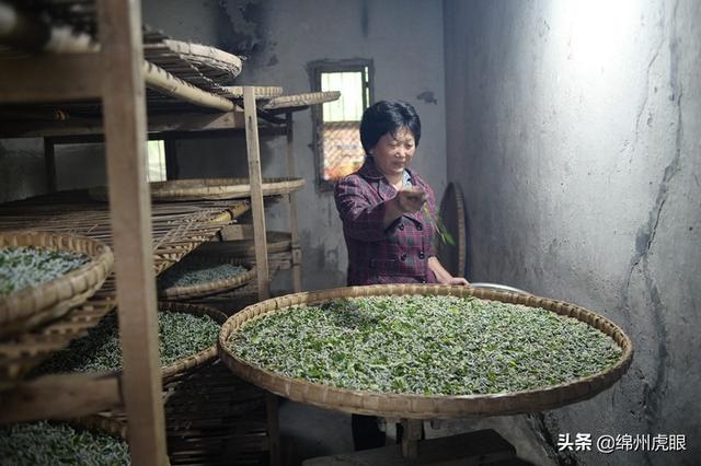 绵阳农村调查——贫困村的每一寸土地,都值得我们坚守