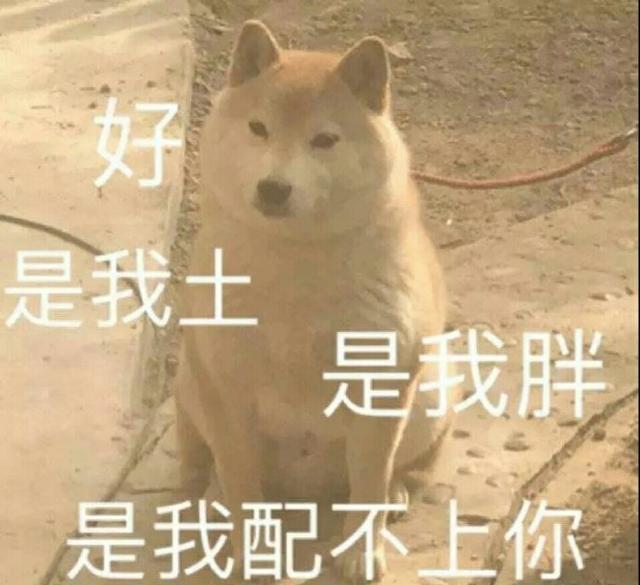 搞笑狗子表情:是开饭了微信里憋嘴表情图片大全图片