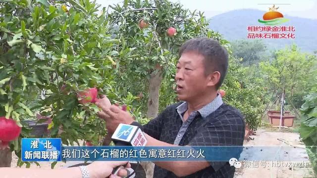 淮北榴园村开辟石榴盆景新路 拓展增收致富真经