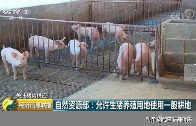农民在自己家确权的普通耕地上建养猪场,算违章建筑吗?