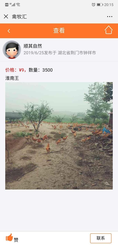 养殖户上头条:土鸡、散养鸡、淮南王,餐馆酒店加工厂要货的联系
