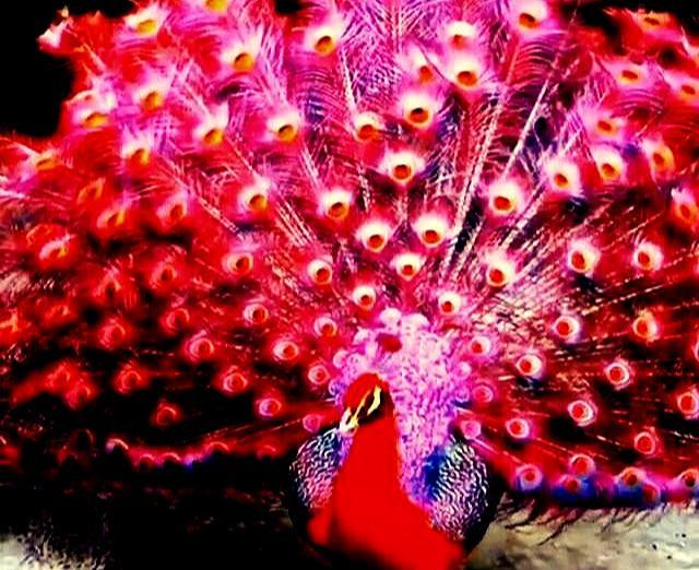 心理学:哪个孔雀最惊艳,测出你身上隐藏着什么能量
