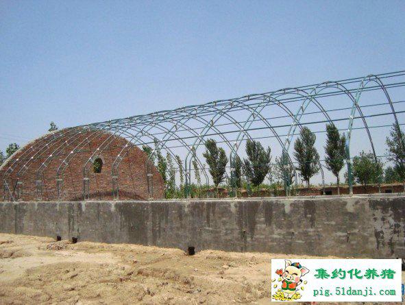塑料大棚养鸡技术_大棚式猪舍有哪些类型_大棚猪舍建造图-猪场建设