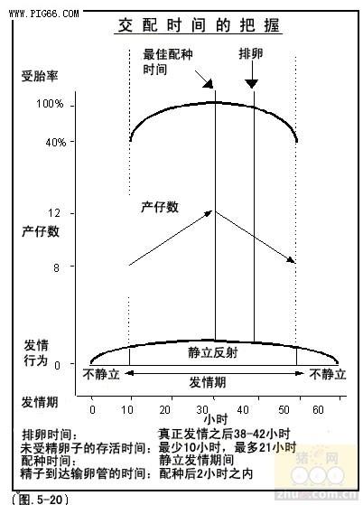 母猪发情周期中激素变化