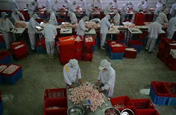 2007年11月,嘉兴浙江五芳斋的猪肉粽子,工厂们时间切用于包一家的正在鸡爪的卤制工人图片
