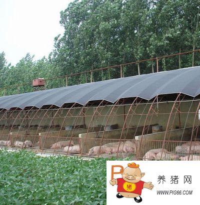 【图文】大棚养猪(图) -猪场建设