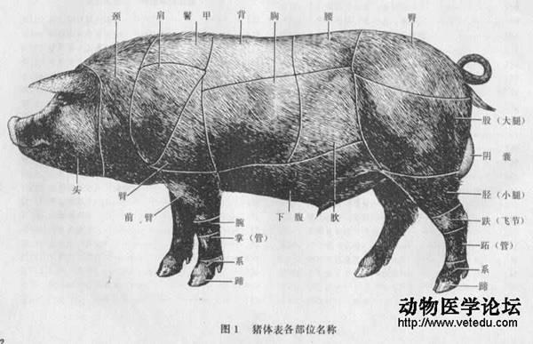 动物解剖3d模型