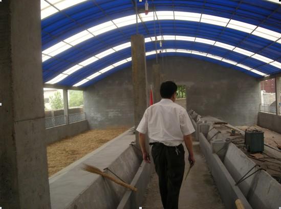 最新资讯_各种猪场、猪舍设计原理与猪舍现场图片-猪场建设