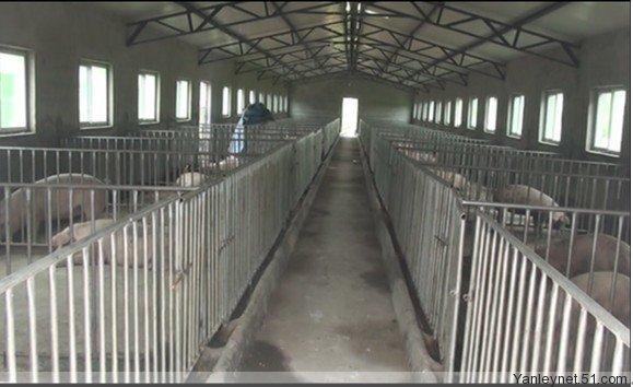 各种猪场,猪舍设计原理与猪舍现场图片图片