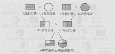 四元杂交 (99)
