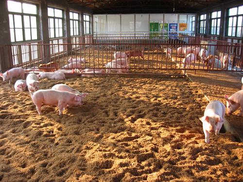 为加强规模养猪场的粪污治理和环境保护图片