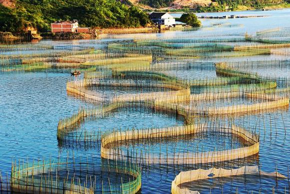 如何养殖出优质健康的河蟹呢?在近几年来,河蟹养殖已经成为了鸡肋,因为河蟹的商品价值较高,销售的价格一直稳中上涨,但是因为河蟹养殖的密度增加、饲养投放过多等等,引起了大量的河蟹病害,使养殖户遭受很大的经济损失,使养殖户放弃养殖河蟹舍不得,不放弃又一直受病害的困扰,农村致富网的编辑现将优质河蟹高产健康养殖的技术介绍给大家: 1.