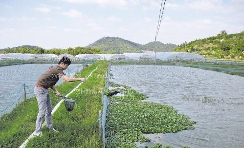 夯实池塘养泥鳅,泥鳅池塘养殖技术 -养殖频道图片