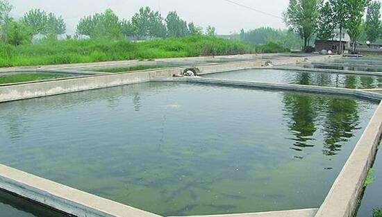 鱼塘潜水泵电容接线图