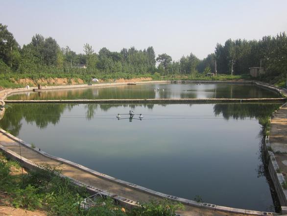 10亩鱼塘设计效果图