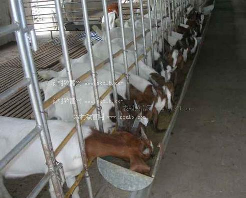 圈养羊养殖场建设图片