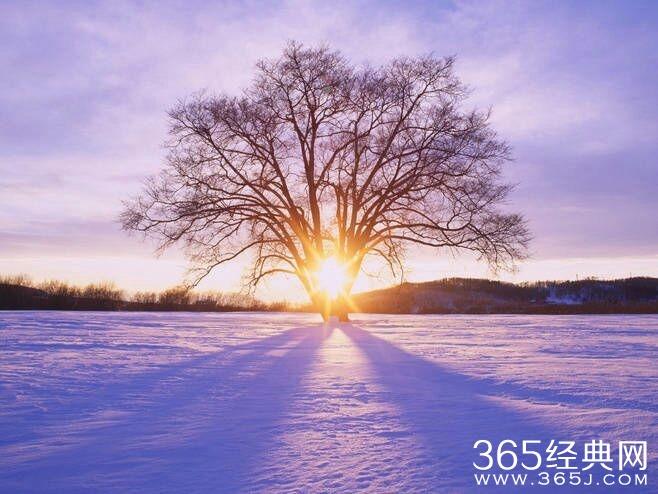 佛曰:缘为冰,我将冰拥在怀中; 冰化了,我才发现缘没了 . 佛曰:前世五百年的回眸才换得今世的擦肩而过 . 佛曰:笑着面对,不去埋怨。悠然,随心,随性,随缘。注定让一 生改变的,只在百年后,那一朵花开的时间。 佛曰- - 人生在世如身处荆棘之中,心不动,人不妄动,不动则不伤; 如心动则人妄动,伤其身痛其骨,于是体会到世间诸般痛苦!