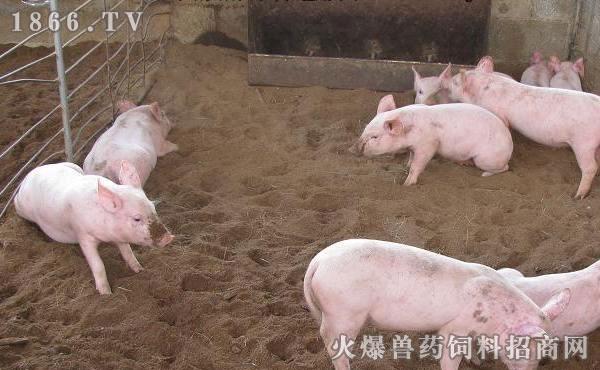 猪圈怎么设计,猪圈设计图