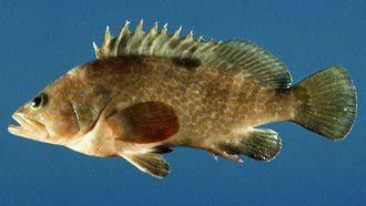 什么鱼可以跟虾混养_鱼虾混养如何喂食_鱼虾混养效益