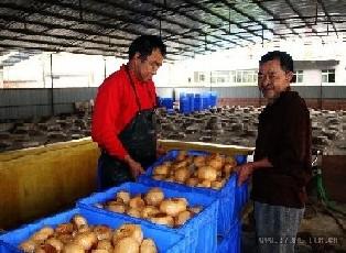 十个效益不错的草鱼加工厂致富农村(2)钓项目用多大防咬子线图片