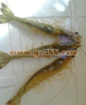 对虾品种介绍--长毛对虾