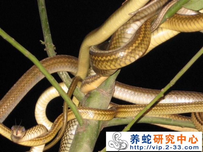 壁纸 动物 蛇 蜥 蜥蜴 670_502