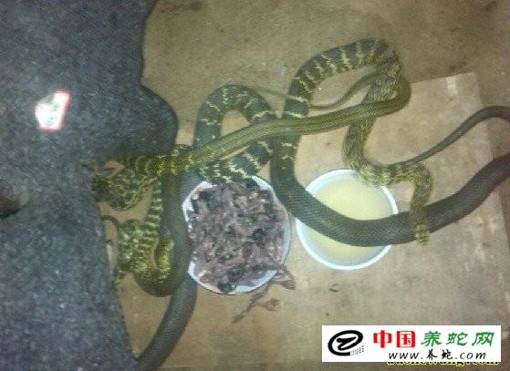养蛇研究中心为中国第一家养蛇