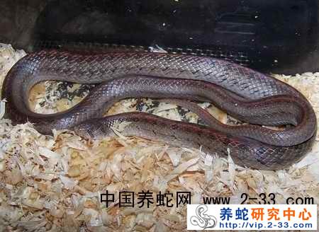 中国福建省蛇类资源分布状况