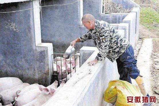 一场意外痛失左腿男子靠养猪照样年入10万