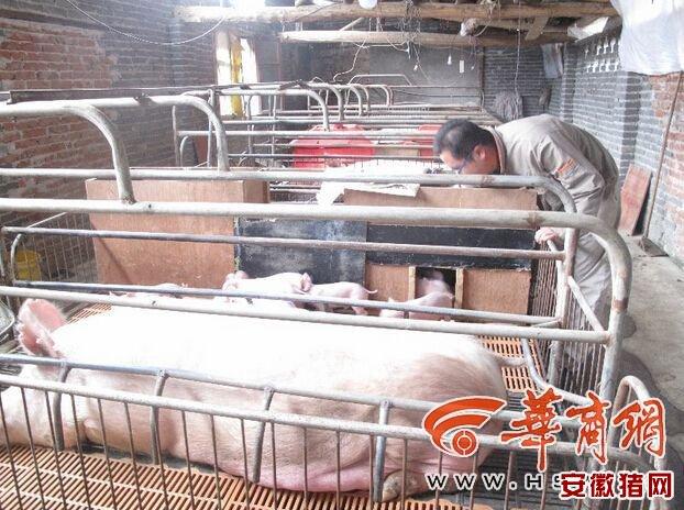 23岁小伙儿开养猪场 获高级职业农民称号