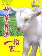 种草养羊一招富