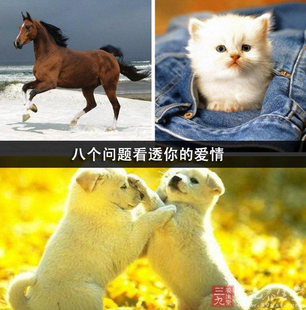 狗怀孕b图_a,狗,b,猫,c,马