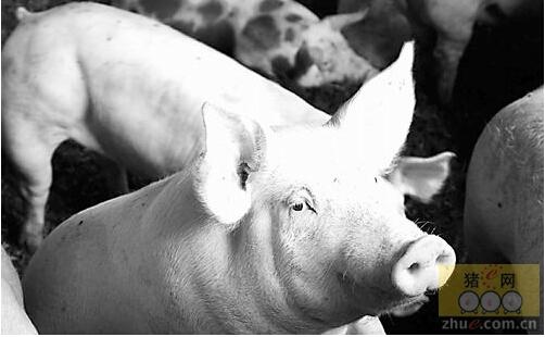 """浅谈猪的""""防火墙""""及""""杀毒程序"""""""