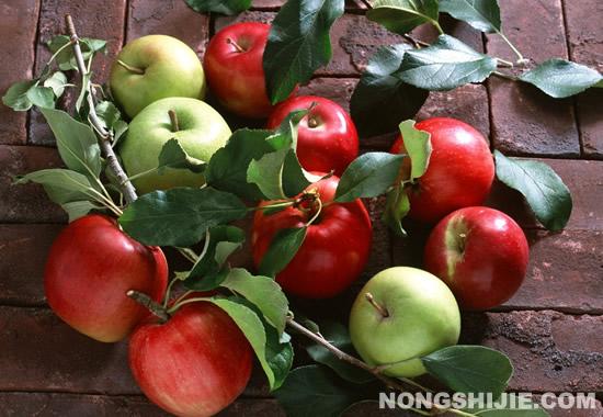 农业部联合7家电商公司,开展苹果电商销售月行动
