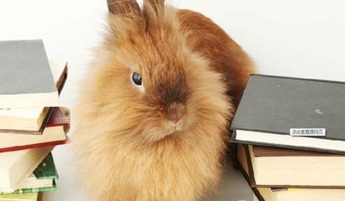 宠物兔的性格类型分析