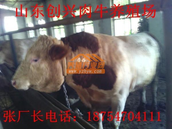山西晋城肉牛养殖场,建一个小型养牛场要花多