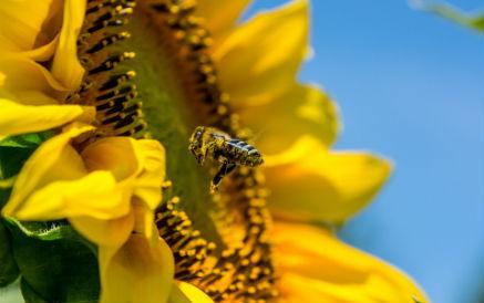 夏季養蜂需要注意什么?