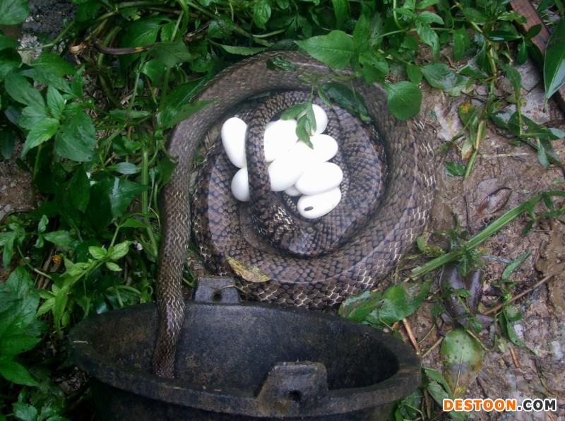 新手养蛇后的销售问题