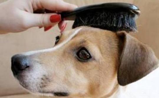 狗狗被毛打结严重怎么办