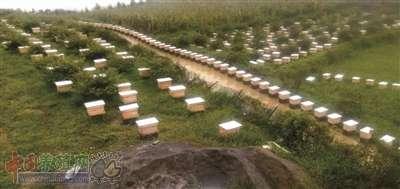 """一箱蜜蜂一年掙3000 林下養蜂""""釀""""甜蜜生活"""