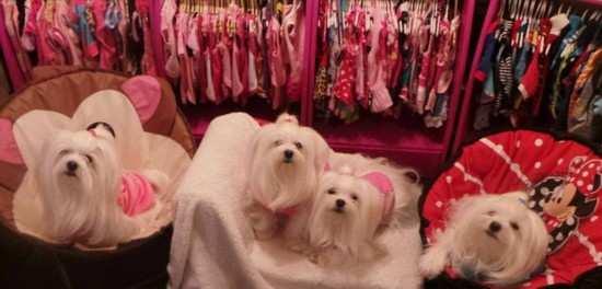 英女子花费数万元为7只宠物狗买衣服【图】