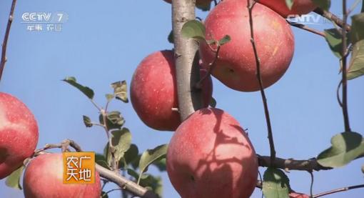 农田餐桌—走进昌平苹果和北京油鸡的生产过程