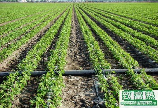 冬季灌溉系统的维护和保养