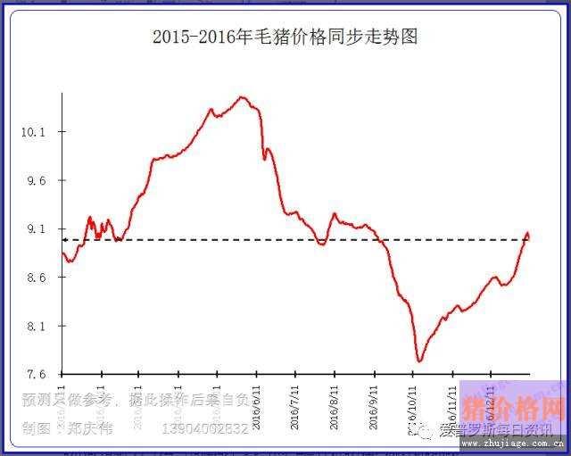 东北猪价行情局部跌破8.5元,形势依然严峻
