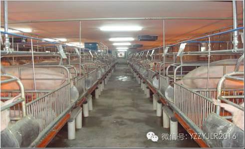 综合养猪视频-方言养猪综合配套农村_科学技术大棚荣成技术图片