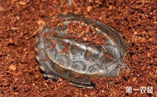 全国乌龟冬眠时间图片