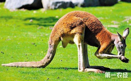 各种动物尾巴的作用