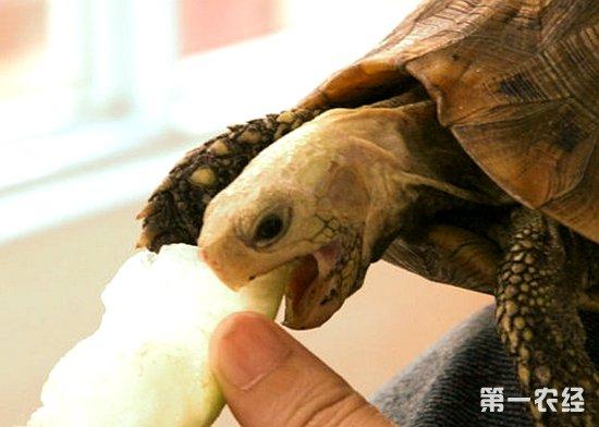 动物造型面包乌龟