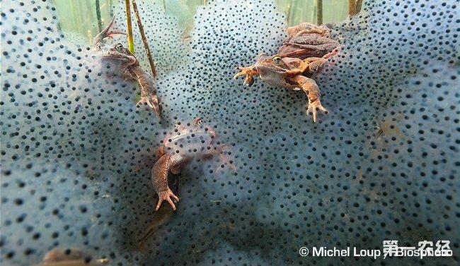 养殖龙虾常见问题_河鳗养殖技术_养殖鳗鱼利润怎么样