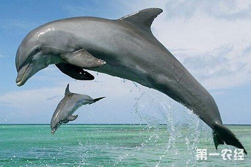 海豚是哺乳动物吗?